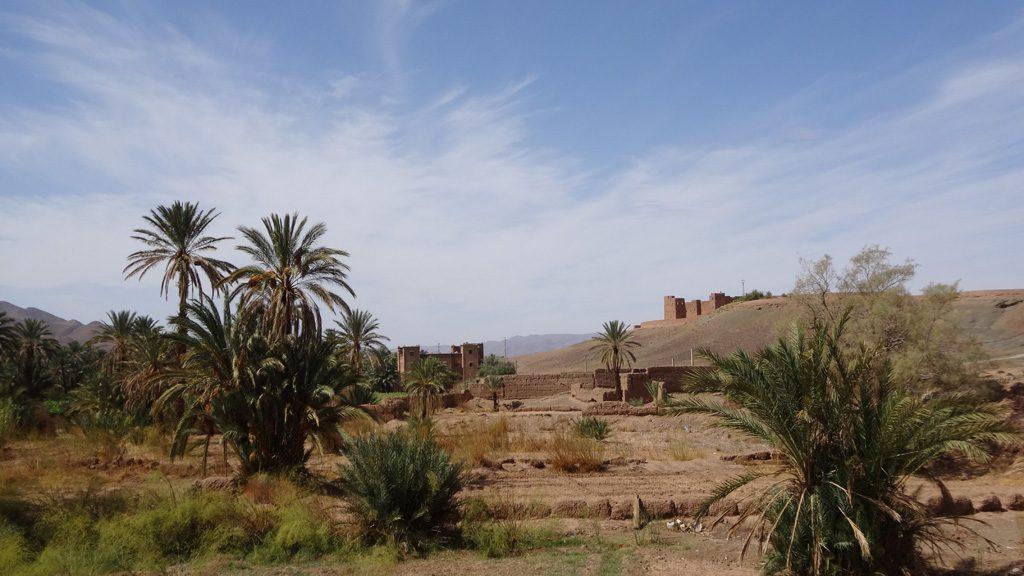oasis ..!