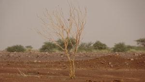 drôle d'arbre a nu..!