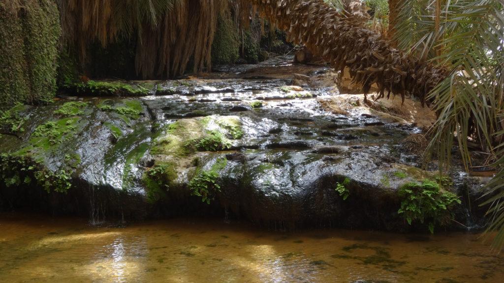 source de l'oasis..