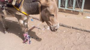 Frein a main pour âne!!