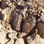 bois fossilisé sur un tombeau préislamique dans le désert.