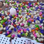 Poussins colorés a la bombe..jouets d'enfants!